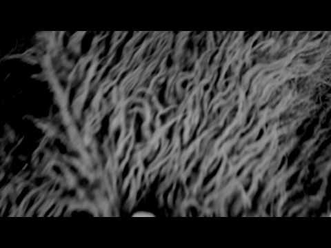 Клип Fanfarlo - If It Is Growing