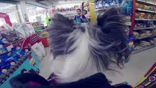 видео Интернет-магазин Четыре лапы (4lapy. Ru) - зоомагазин
