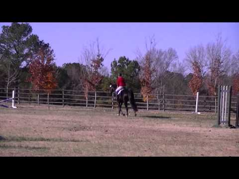 five county jumper show