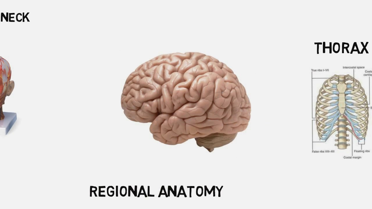 The human body parts anatomy and positions - YouTube