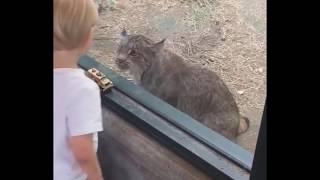 Funny Cute Animals 💙❤ 🐱😜🐶 , Animal Kingdom, Funniest Videos, sweet Popular Trend Tik Tok Musically