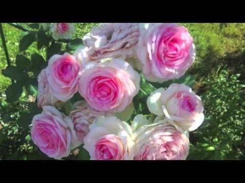 Самые редкие цветы 3В