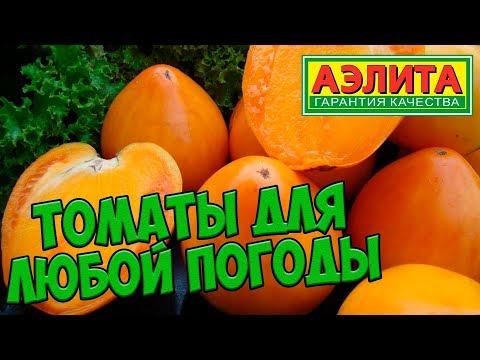 сорта семян томатов
