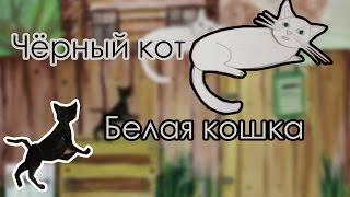 Чёрный кот, белая кошка