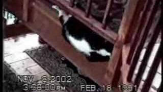 חתולים שאוהבים להצחיק אותנו