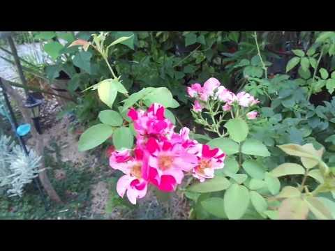 le jardin le clos fleuri dans la drome