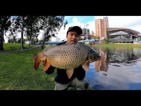 MOST ACCESSIBLE FISH IN ADELAIDE? (and Easiest To Catch!)