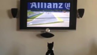 Kitten Can't Watch Hamilton & Rosberg Crash  : F1 Spanish Grand Prix