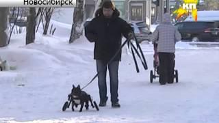 Новосибирец делает для животных-инвалидов коляски