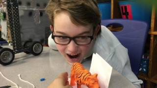 Saving the Tiger Engineering Project at Meadow Oaks Academy