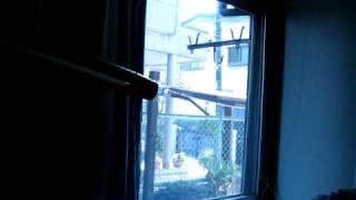 3月11日日本地震 東京附近家中 強烈 avi