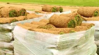 видео Партерный газон
