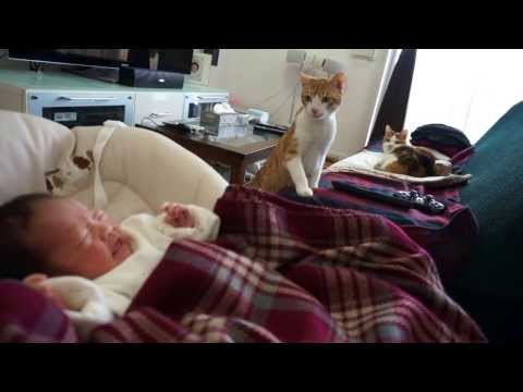赤ちゃんが気になる猫 curious cats meet a baby for the first time
