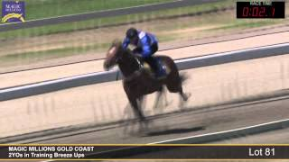 Lot 81 - 2YOs in Training Breezeup Thumbnail