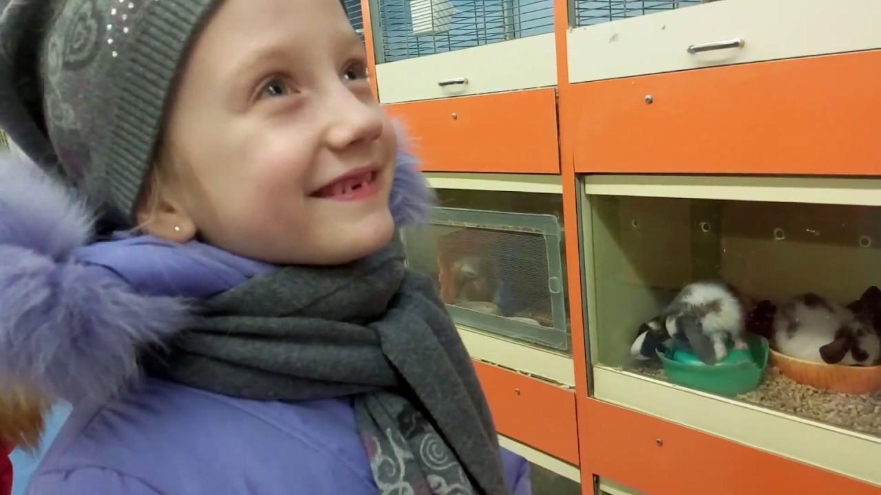 Объявления о продаже домашних и сельскохозяйственных животных в новокузнецке на avito.