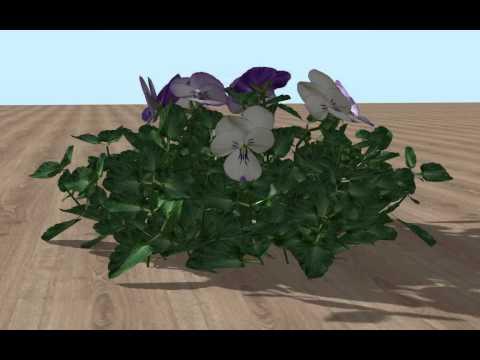 3D Vectorworks model of a Viola cornuta