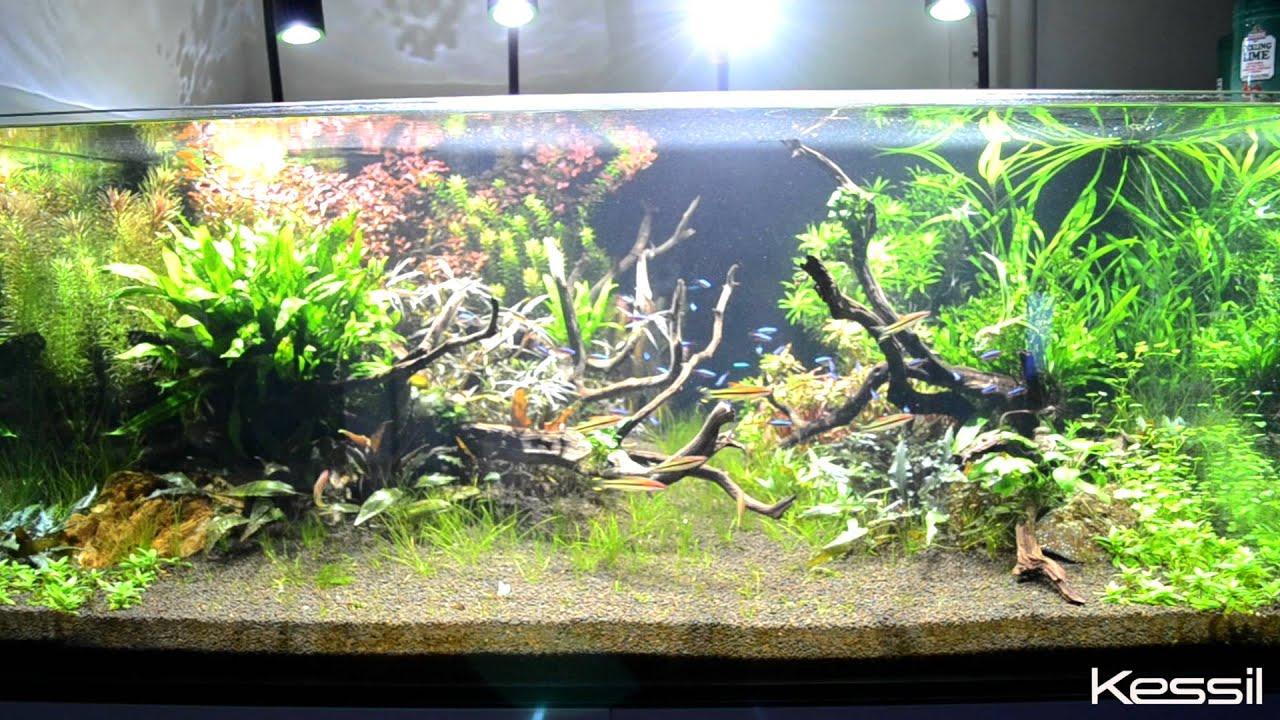 kessil a150w amazon sun led aquarium light at neptune aquatics in milpitas california