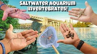 catching-exotic-creatures-for-my-aquarium-2