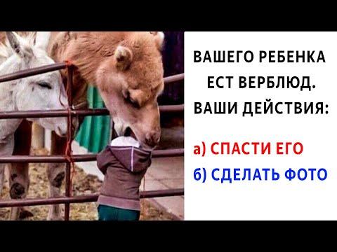 Лютые приколы. КОРОЧЕ ГОВОРЯ, вашего ребенка ест верблюд. УГАРНЫЕ МЕМЫ