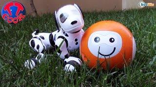 Собака Зумер - Интерактивная игрушка. Ярослава играет с роботом собакой Zoomer. Видео для детей