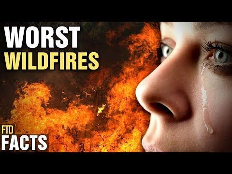 5 Most Devastating Forest Fires In The World