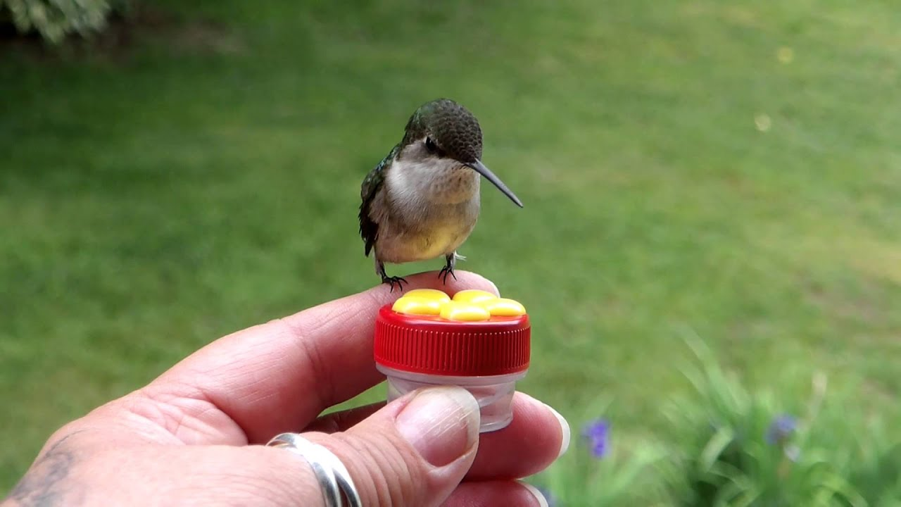 step hummingbird to gallon ways fill feeder one wikihow a