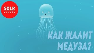 �������� ���� Как медуза может вас ужалить? - Neosha S Kashef (SOLR озвучка) ������