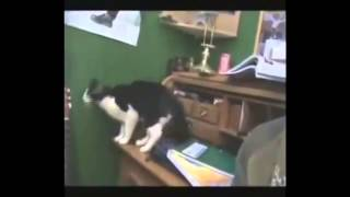 Кошки, похожие на знаменитостей.