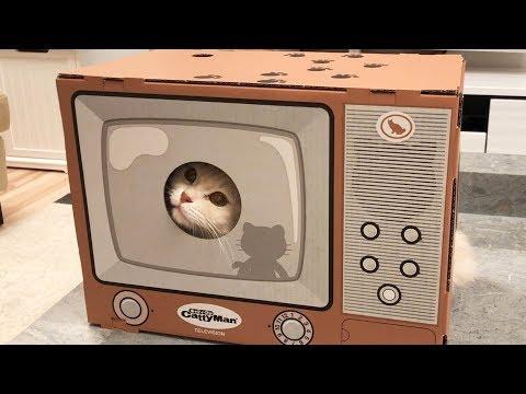 テレビから猫が出てくる「貞にゃん子」が可愛すぎたw