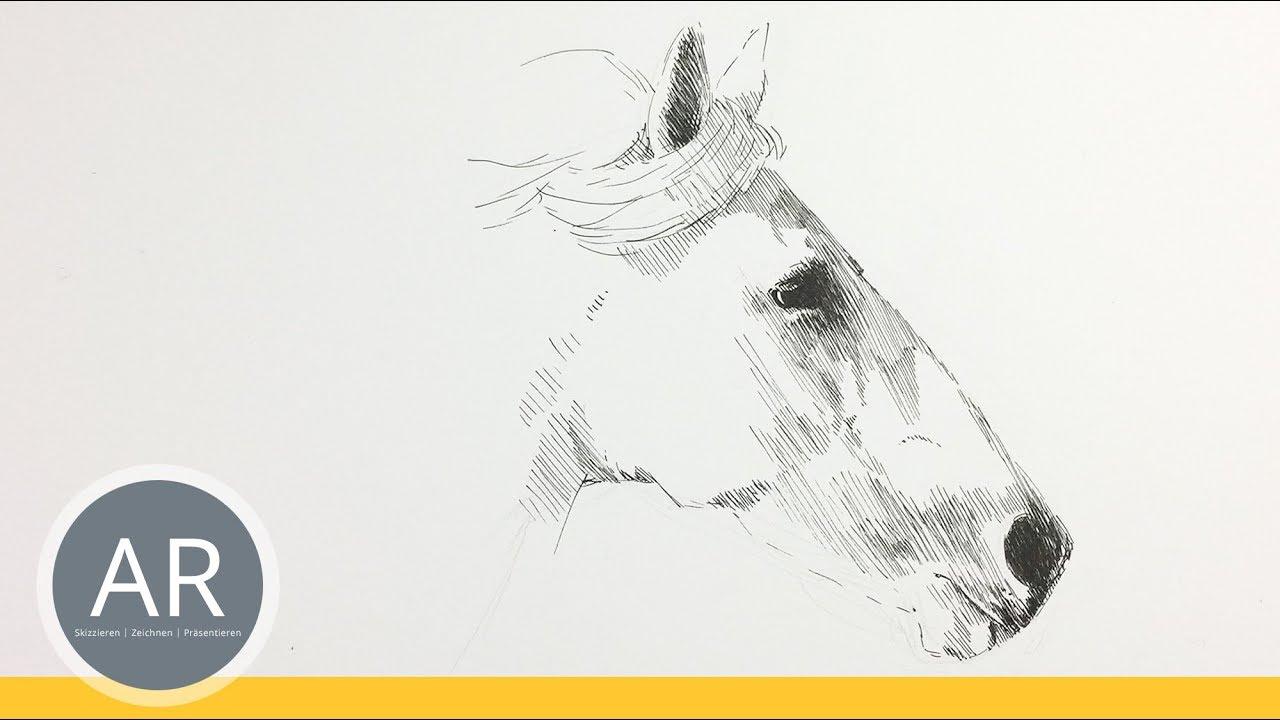 Pferde Zeichnen Lernen Skizziere Pferde Portraits Bewerbungsmappe
