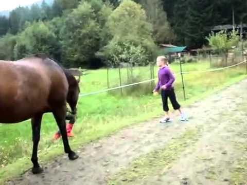 Horse farted and scared itself AND CHILD