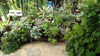Plantas que quase não são mostradas e quase não vejo em vídeos