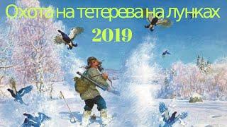 Охота на тетерева на лунках 2019_охота на тетерева из под снега!