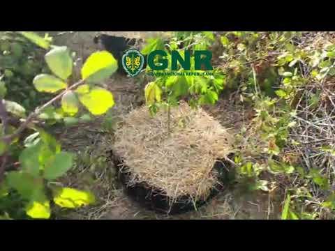 2020-08-07 - UCC-GNR - Apreensão de Cannabis Odemira