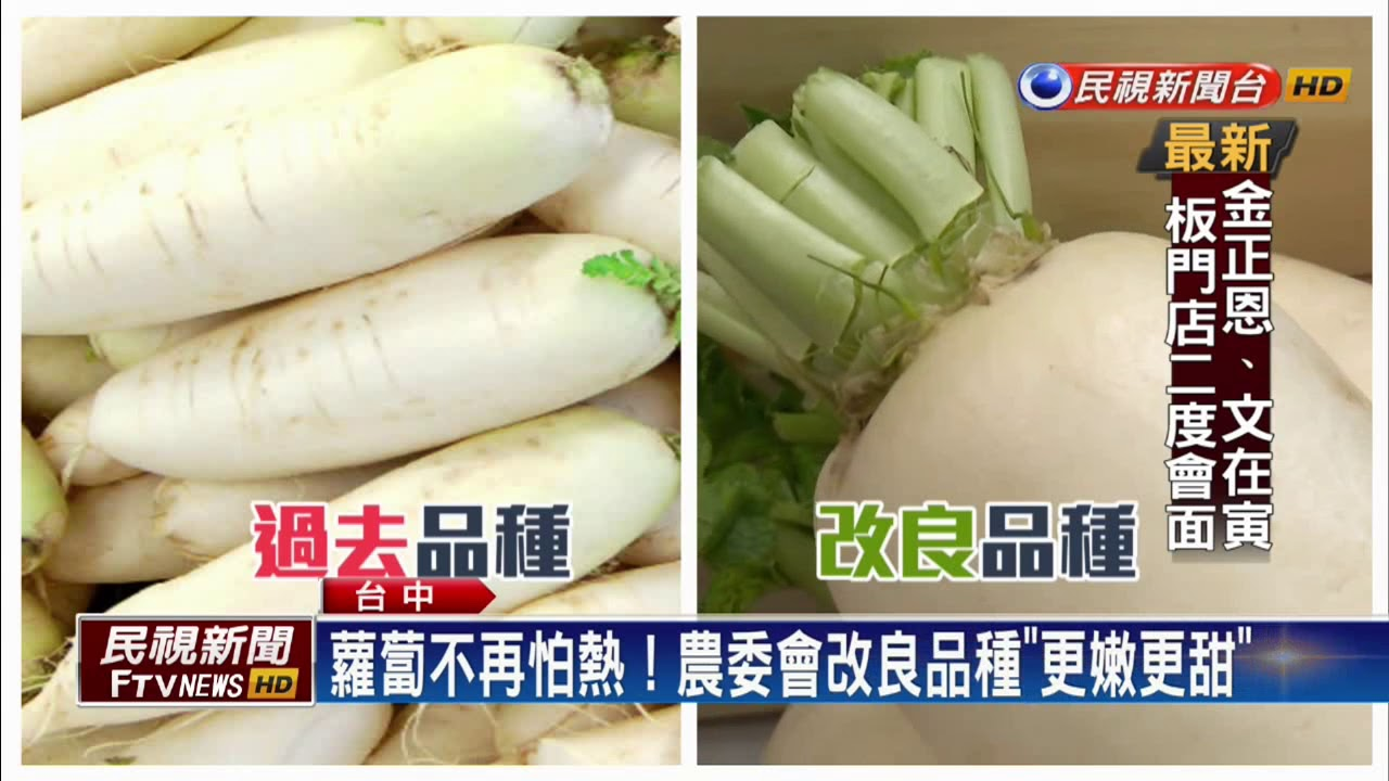 蘿蔔不再怕熱!農委會改良品種「更嫩更甜」-民視新聞