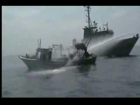 Free Gaza Movement  - Italian activist injured by Israeli navy