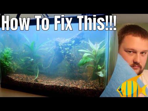 Cloudy Aquarium Water - How To Fix It!