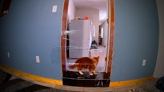 Cling Film Fails On Pets 😂😂 Cling Film Prank on Cats and Dogs (Full) [Epic Life]
