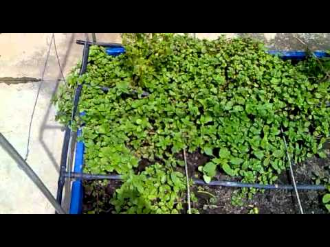 Our Small Organic Terrace Gardens OTG YouTube