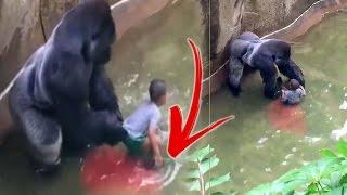 La CRUDA Verdad sobre la Caída de Niño en la Jaula del Gorila.