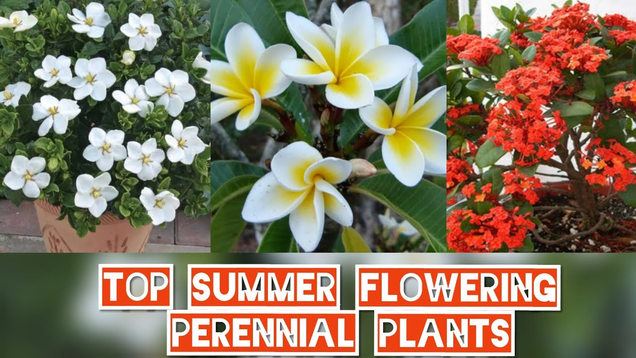 Top 7 Summer Flowering Plants With Propagation Top 7 Permanent