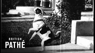 Dog Days - A Pictorial Novelty (1930)