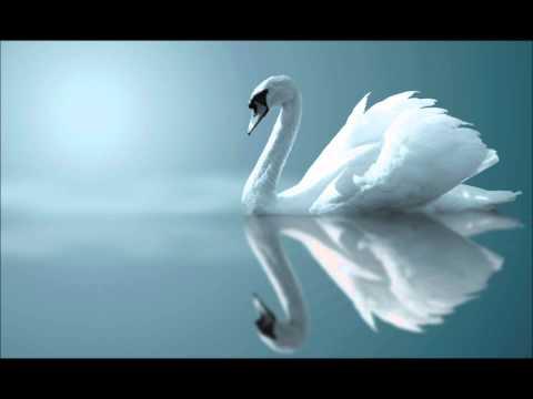 Красивая музыка - Ржачные видео приколы