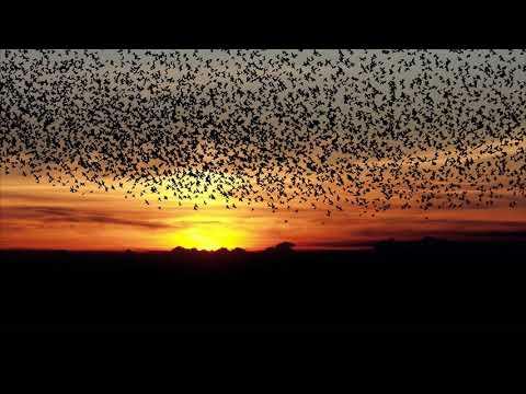 Как птицы готовятся к перелету в теплые края