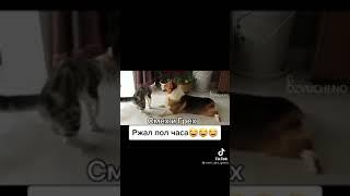 Смешные видео Животных Тренд Красотка ЛедиДиана Краш тикток