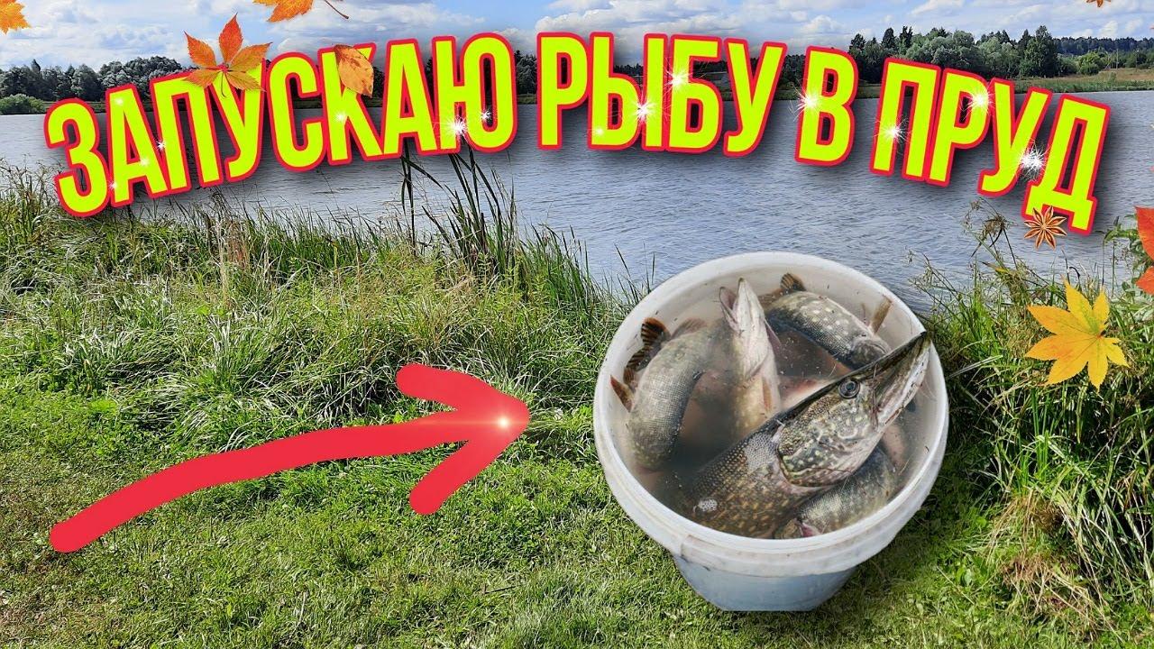 Запустил рыбу в пруд | ОПУСТОШИЛ ВАННУ С РЫБОЙ | НАШЛИ НОВУЮ ЗАБРОШКУ!