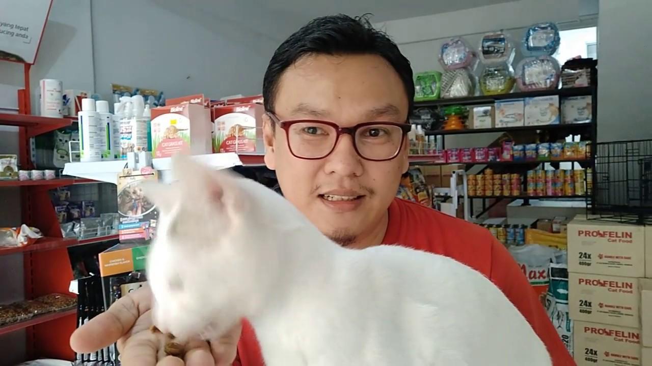 Review Makanan Kucing Bolt Youtube