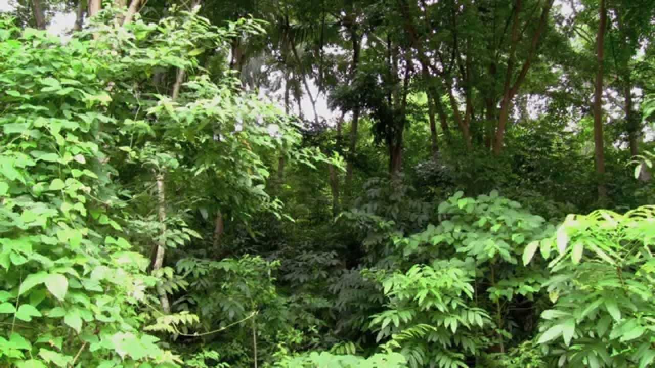 Rain sound and rainforest animals sound relaxing sleep youtube.