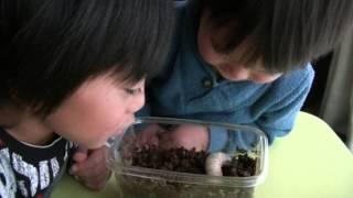 2才と6才5ヶ月、カブトムシの幼虫とはじめてふれあっています。 ※虫が苦...