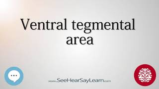 Ventral tegmental area   Anatomy of the Brain   SeeHearSayLearn 🔊